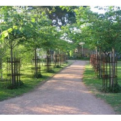 French Style Iron Tree Guards